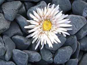 черен овален камък овален базалт